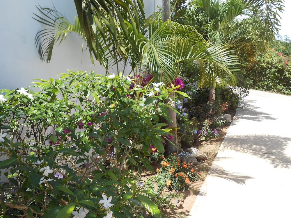 Property Grounds, Modern Oasis On Tropical Property!special Offer Rental 2 Nights get 1 Free!