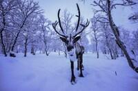 Kirkenes Snowhotel (15 of 70)