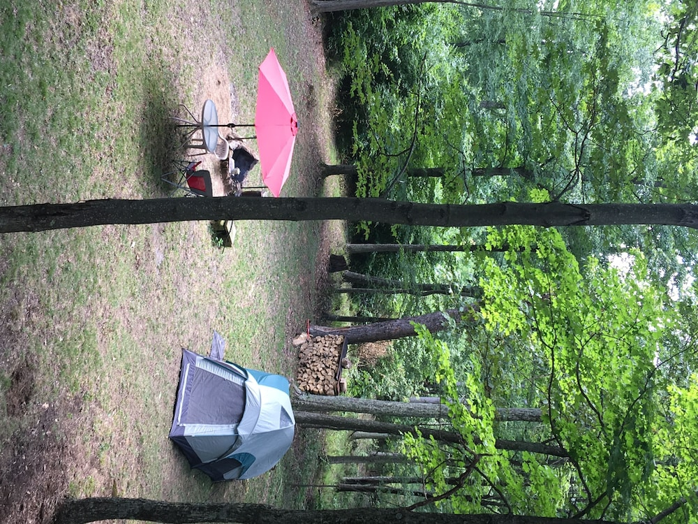 Property Grounds, Woodys Treehouse Hideaway In French Creek,w.va Reviews on Airbnb