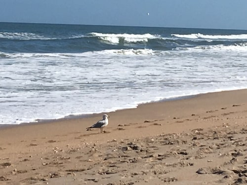 $299.00 Deal 3nights June 9-11 & 16-18 Only. 100 Steps to Ocean