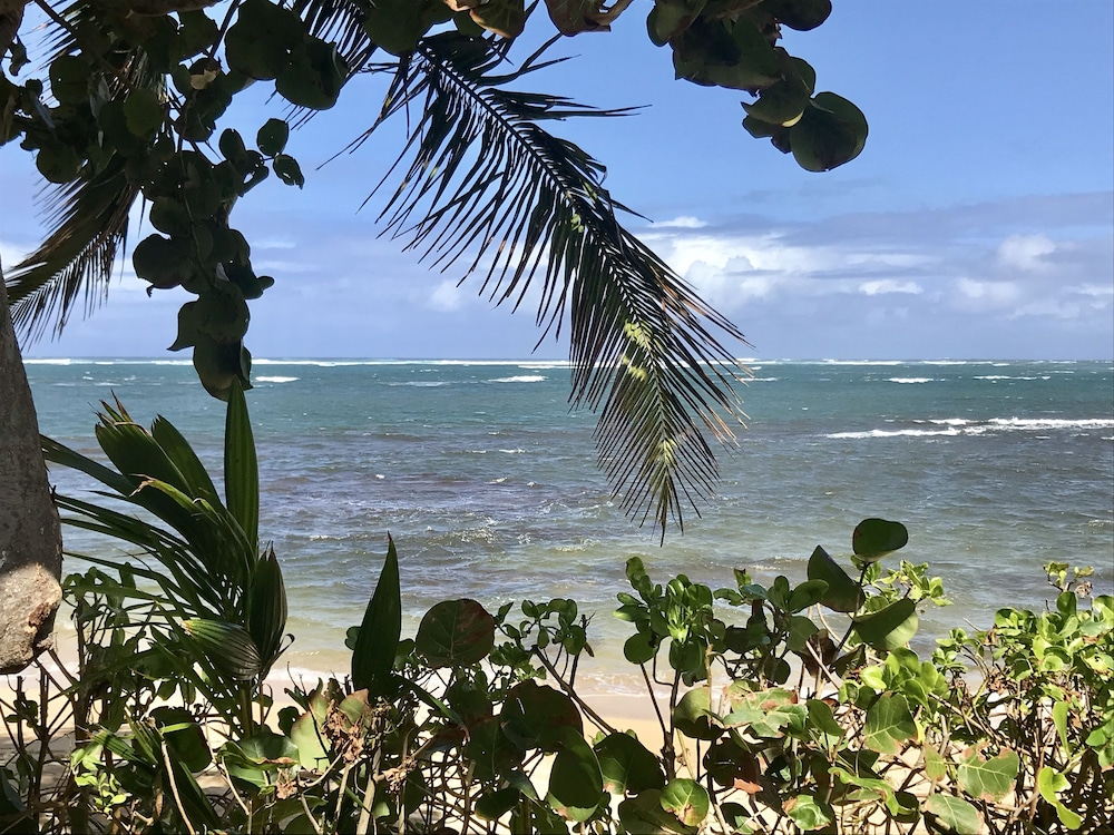 Beach, Waialua Honu Hale - Spectacular Beachfront Home! 30 Day Rental