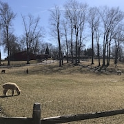 5 Acre Alpaca and Hobby Farm Minutes From Kent