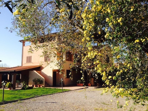 Apartments in the Olive Groves of Maremma - With Olive Trees and Garden Views