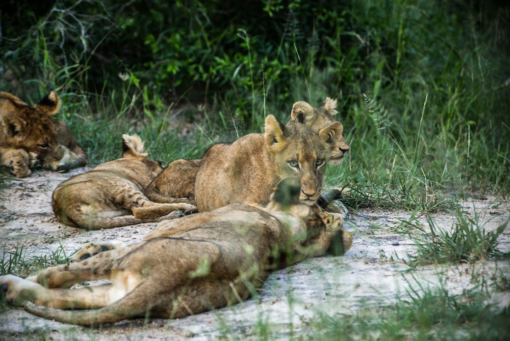 Game Viewing, Lion Sands Narina Lodge