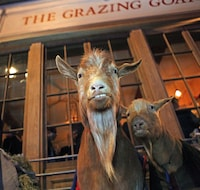 The Grazing Goat (25 of 25)