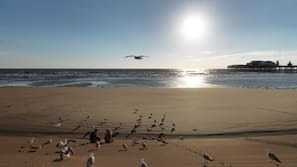 Beach nearby, black sand, sun-loungers, 20 beach bars