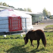 Mongolian Yurt Farm