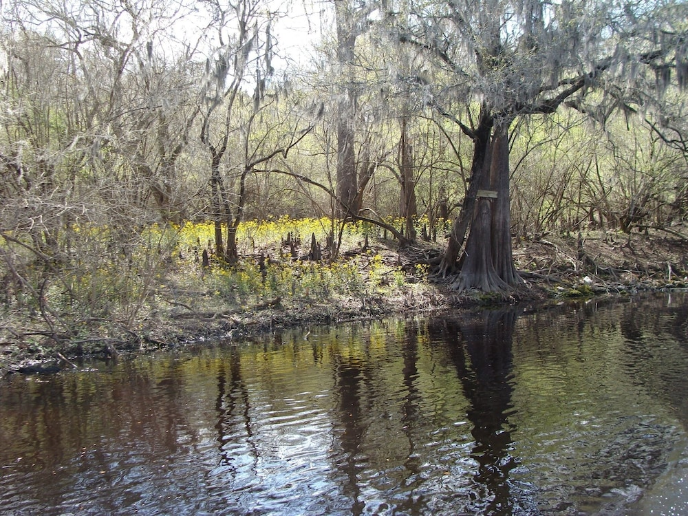 Property Grounds, Cabin on Sante Fe Inlet in Three River Estates (walking distance to park)