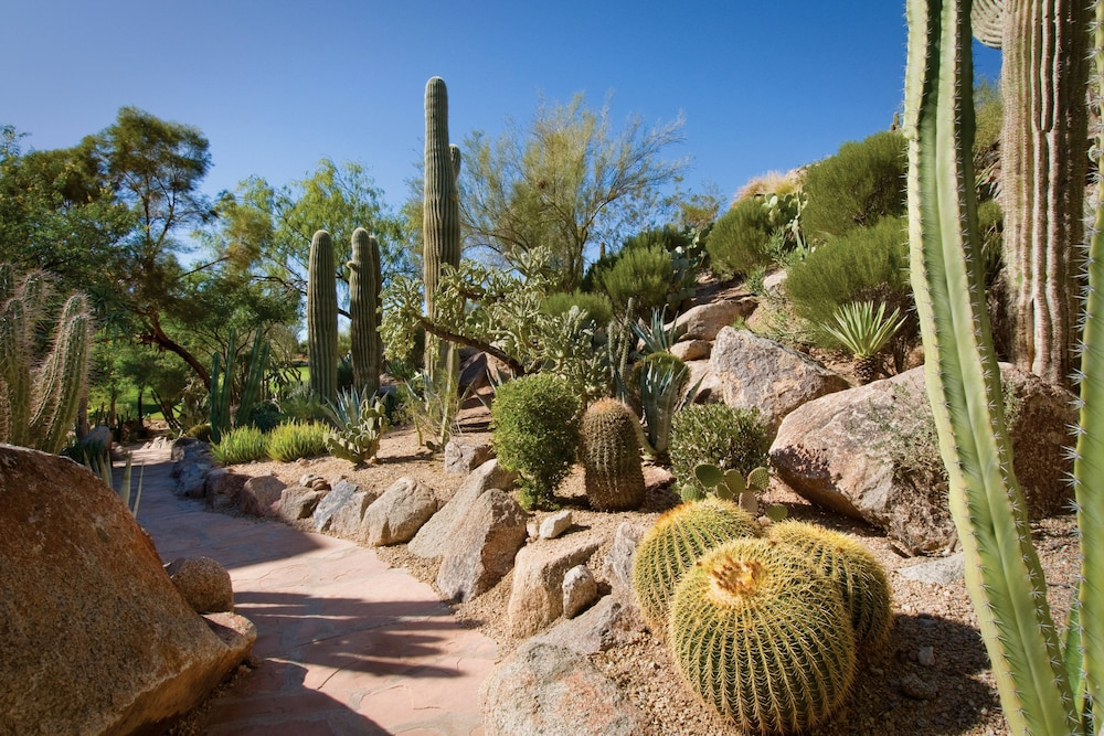 Garden, The Canyon Suites at The Phoenician, Luxury Collection