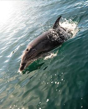 Arthurs Bay, Queen Charlotte Sound, Marlborough, South Island, New Zealand.