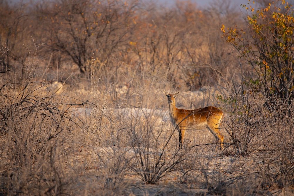 Game Viewing, Etosha Trading Post