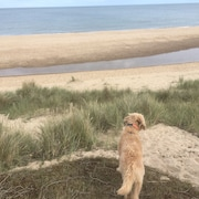 Dog Friendly Cottage Moments From Beautiful Winterton Beach