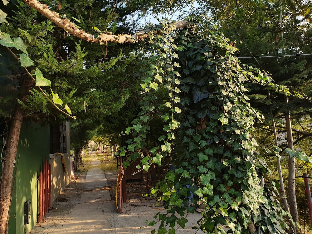 Property Grounds, Sequoia Guesthouse