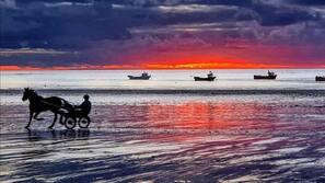 Plage à proximité, bar de plage