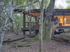 andBeyond Phinda Forest Lodge - All Inclusive