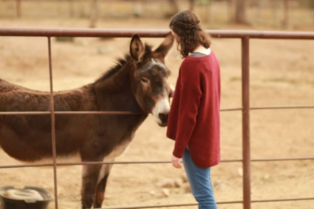 , B&B Ranch Bordering Natl. Forest, Horses Welcome