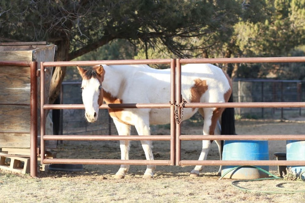 Property Grounds, B&B Ranch Bordering Natl. Forest, Horses Welcome