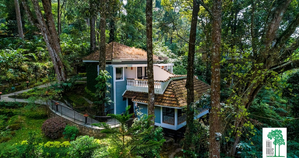 Featured Image, The Tall Trees Munnar