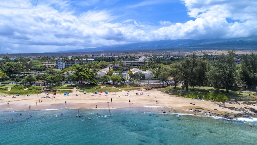 Maui Banyan Basic by AEI