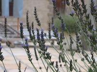 Auberge Provence (36 of 63)