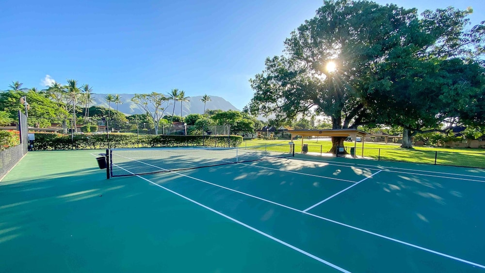 Sport Court, New, Bright, Clean, Modern Gem! Vitamix, Surfboards, Bikes Included :)