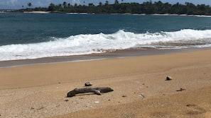 Beach nearby, beach towels, rowing, fishing