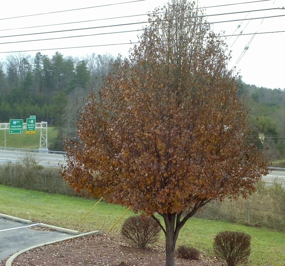 View from Property, Campton Parkway Inn