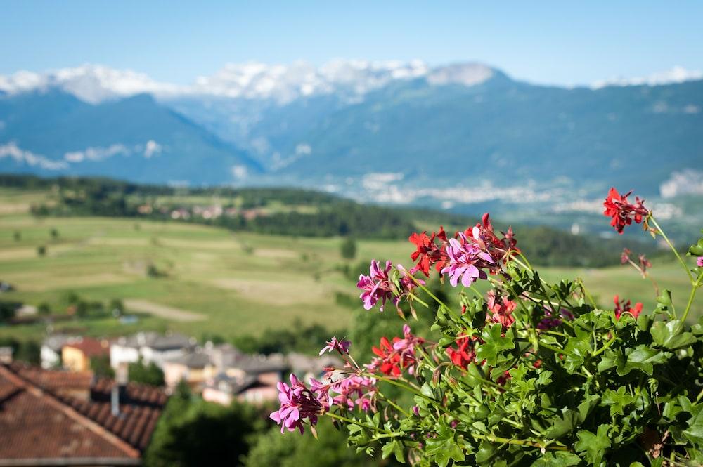 Blumenhotel Belsoggiorno, Malosco: Hotelbewertungen 2018 | Expedia.de