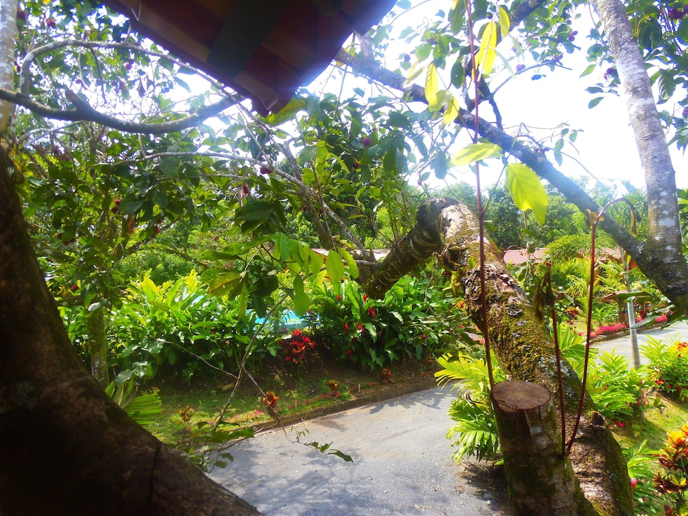 View from Property, Heliconias Nature Lodge