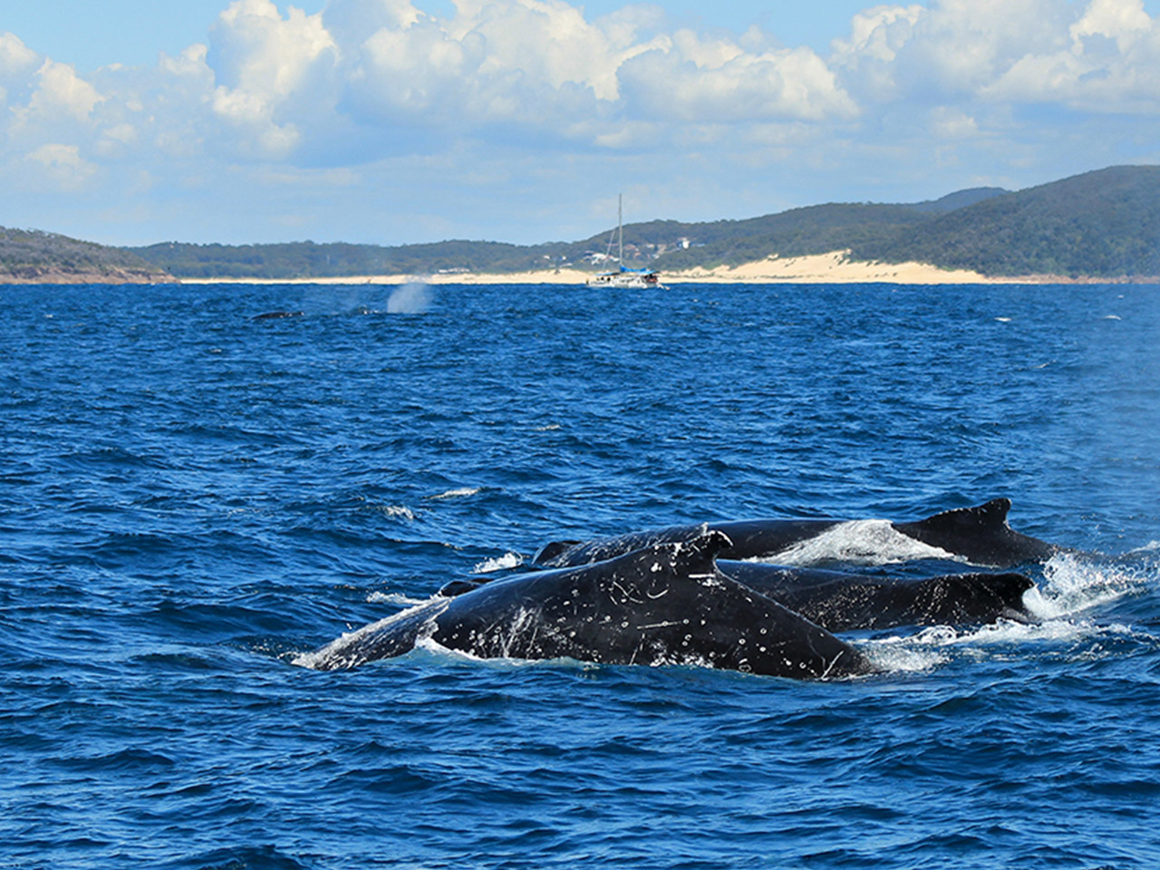 A Guide to Whale Watching in Sydney