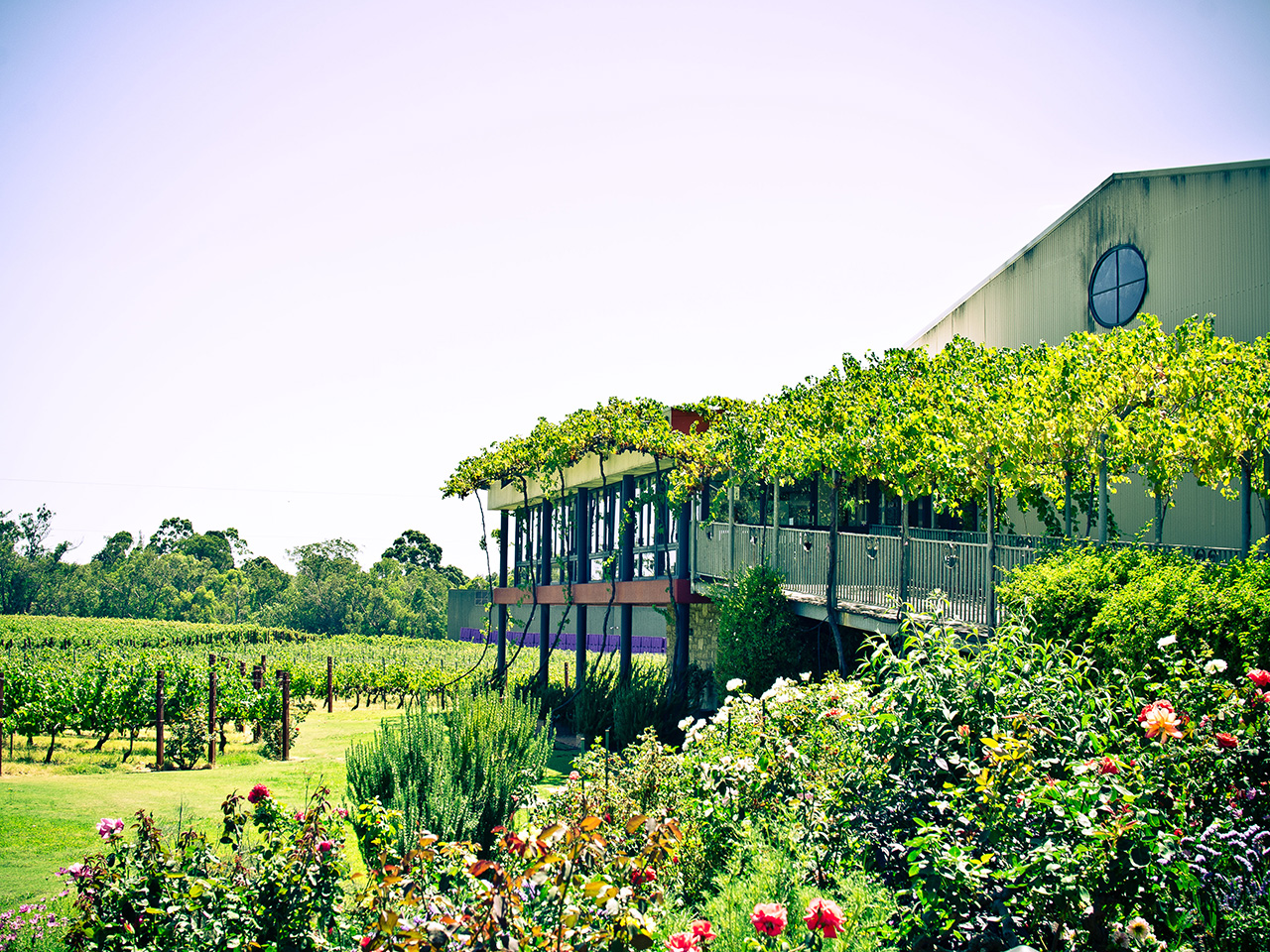 A foodie adventure in Margaret River and the Swan Valley