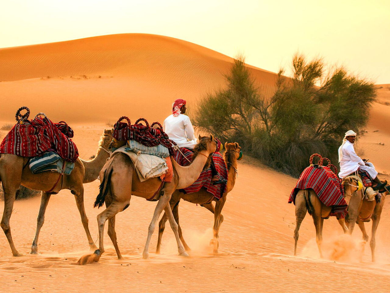 7 awesome desert safaris in Dubai