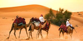 7 awesome desert safaris in Dubai