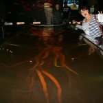 Colossal squid exhibit at Te Papa