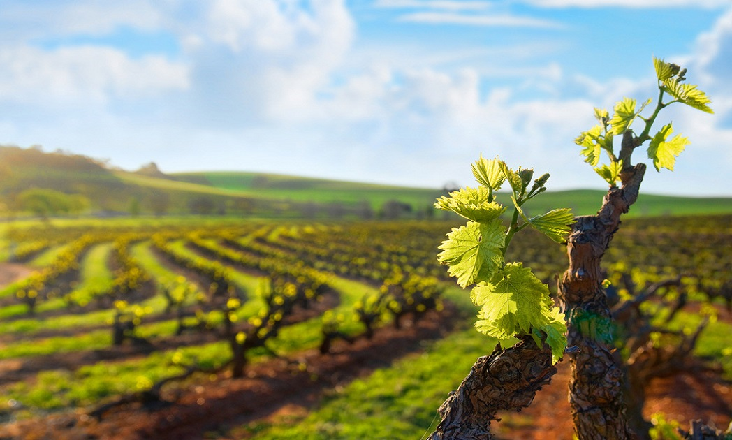 vineyard vines wallpaper