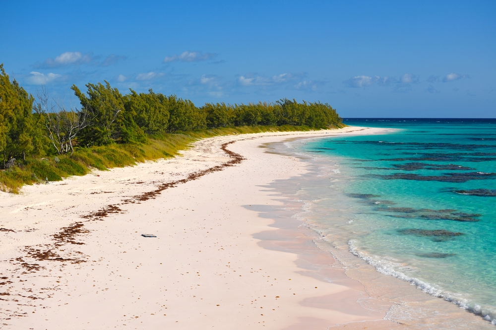 Pretty in pink attractions live last minute for Pink sand beaches bahamas