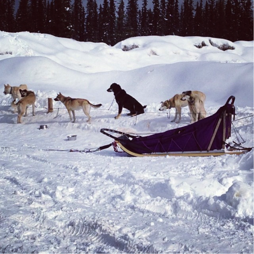 A day tour out to Lake Louise led me to dog sledding, ice castles, and meeting some great fellow solo travellers.