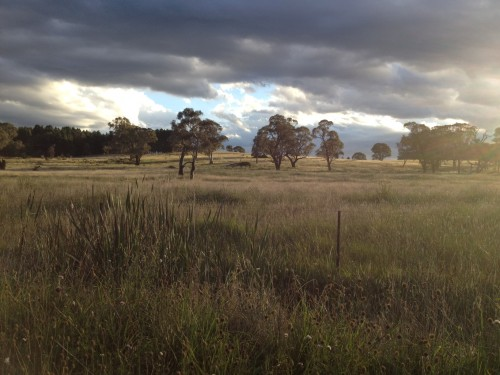 On the road to Mudgee