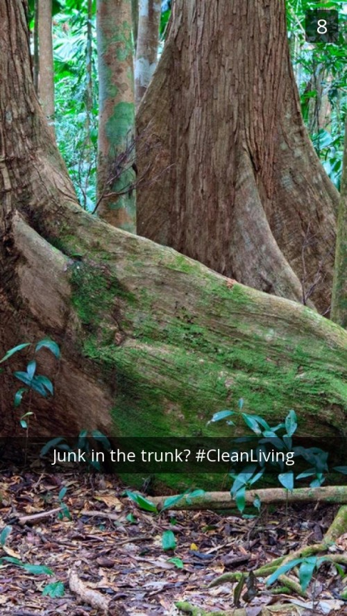 Daintree Rainforest Snapchat