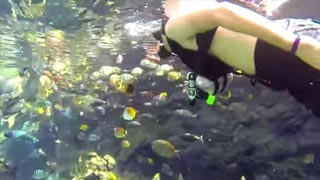 Under the Sea with Supplied-Air Snorkeling in Rainbow Reef