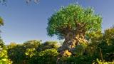 The Tree of Life at Disney's Animal Kingdom® Park