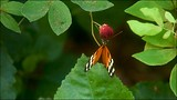 Butterfly and Orchid Garden - Thames - Tourism Media