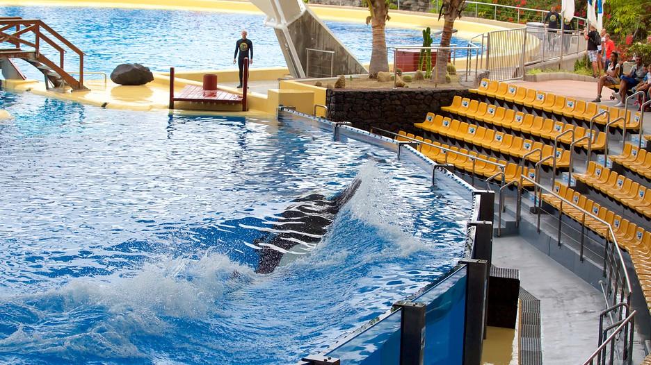 Loro Park in Puerto de la Cruz,  Expedia