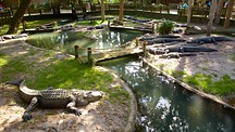 St. Augustine Alligator Farm Zoological Park - St. Augustine (y alrededores)