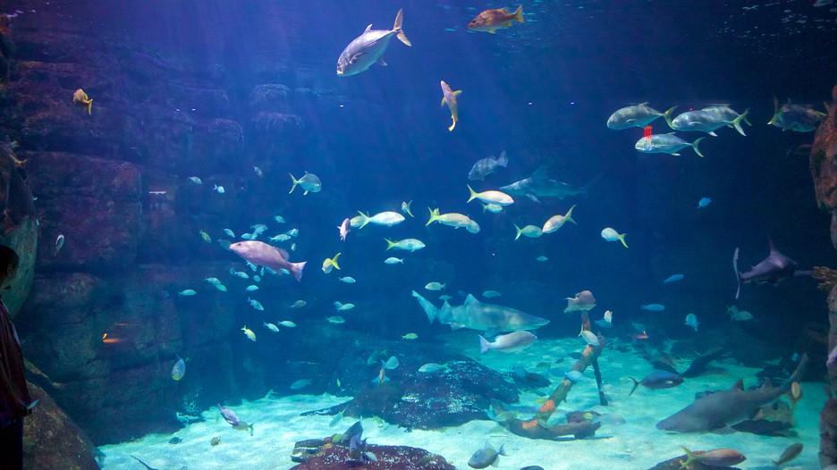 Virginia Aquarium And Marine Science Center In Virginia Beach Virginia