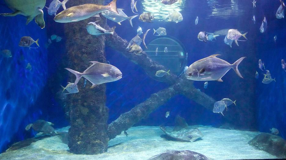 Virginia Aquarium And Marine Science Center In Virginia