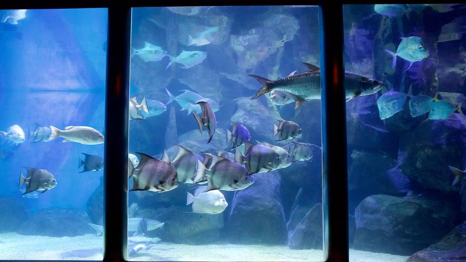 Virginia Aquarium And Marine Science Center In Virginia Beach Virginia Expedia