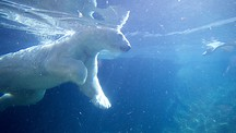 Point Defiance Zoo and Aquarium - Tacoma