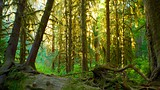 Hoh Rain Forest Visitor Center - Washington - Tourism Media
