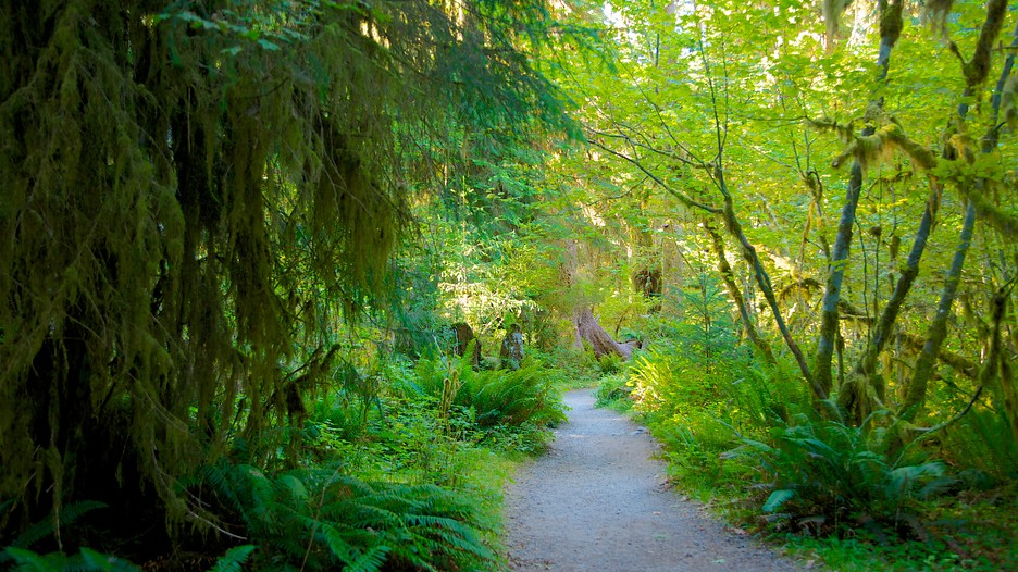 Hoh rain forest visitor center forks washington for Cabin rentals olympic national forest